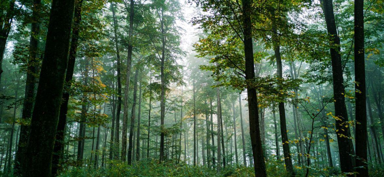 200929 Blogbeitrag zum Dannenröder Wald Foto 1